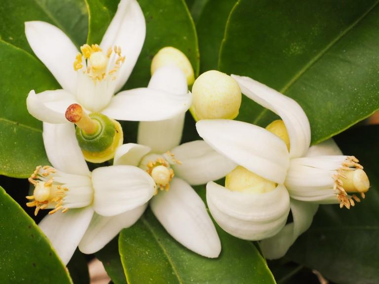 fiori-darancio1